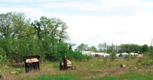 Saw Mill Creek Marsh