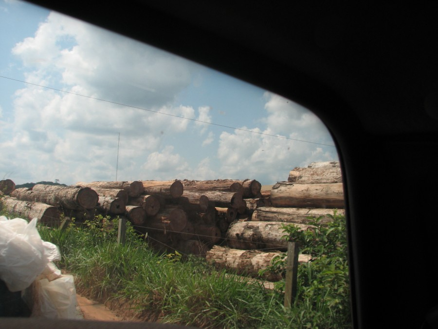 photo of stacked logs